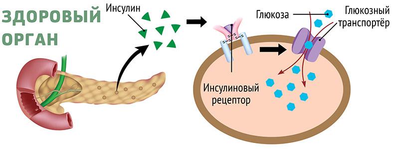 Глюкозный транспортер зерновой пневматический транспортер